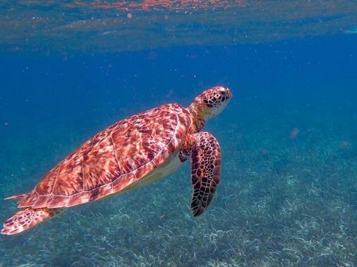 turtle-1958058_640