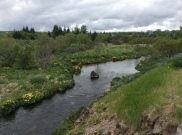 the beautiful River of Elliði