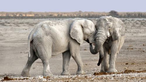elephant-1170108_1920