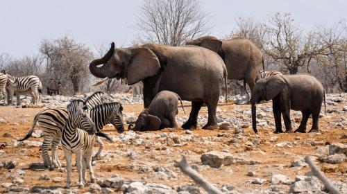 elephant-1170112_1920