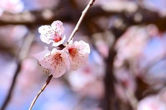 spring-1758343_640
