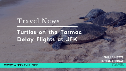 turtle travel news turtles