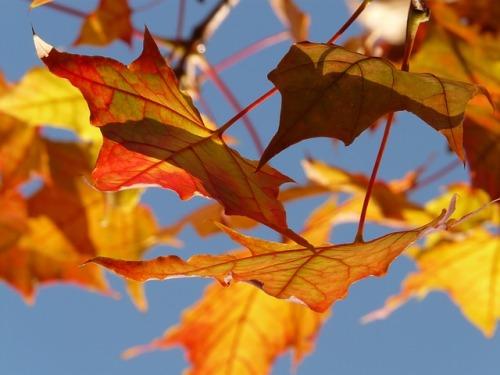 autumn-10484_640