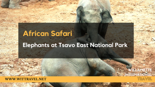 African safari Maasai mara-2
