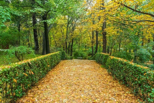 autumn-1019284_640.jpg