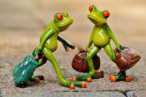 frogs-897387_640