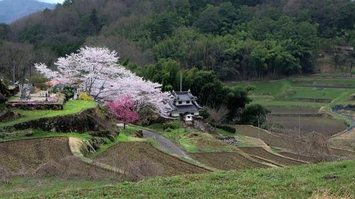 japan-714356_640