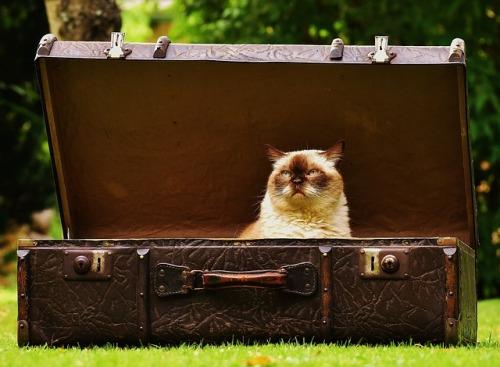 luggage-1643010_640