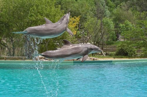 dolphin-3416519_640.jpg