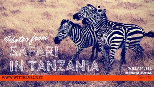 safari tanzania zebra.jpg