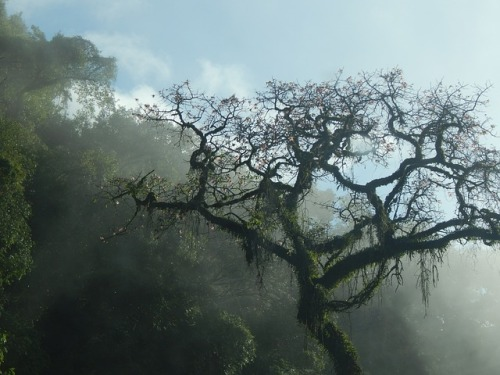 tree-2371512_640