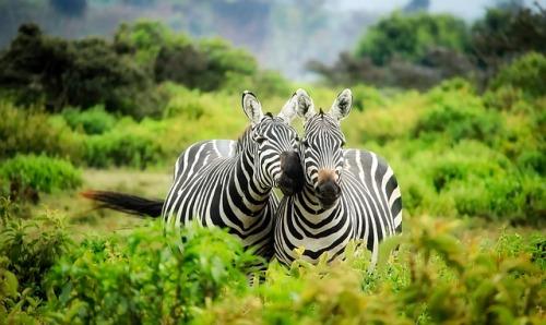 kenya-1883654_640