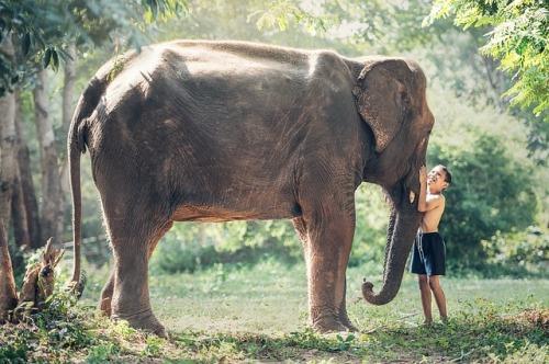 elephant-1822492_640